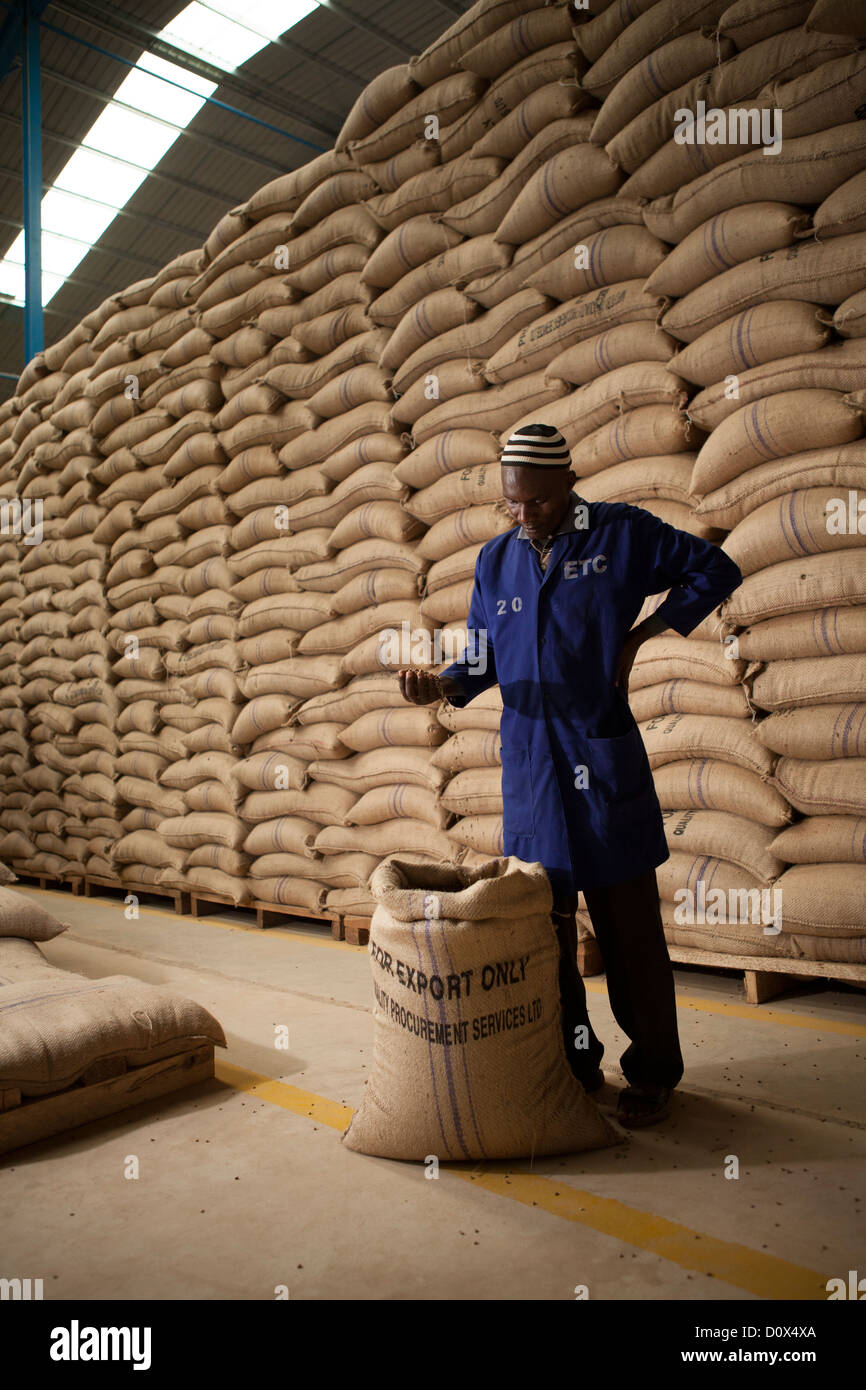 A workers prepares coffee beans for export at a warehouse in Kampala, Uganda, East Africa. - Stock Image