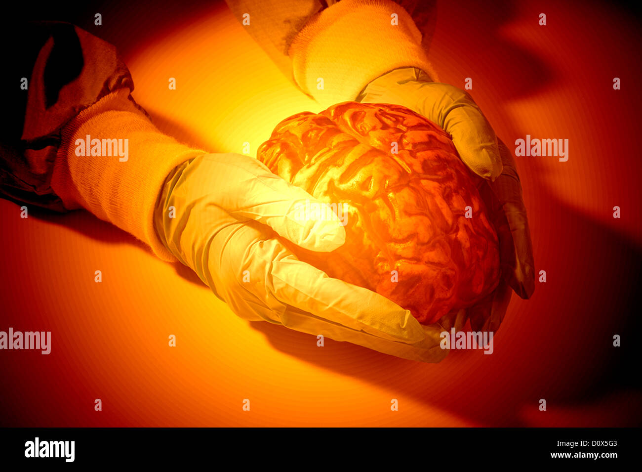computer generated gloved hands holding human brain abstract - Stock Image