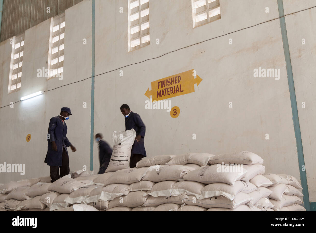 Workers stack bags of lentils (pulses) at a commodities warehouse in Dodoma, Tanzania, East Africa. - Stock Image