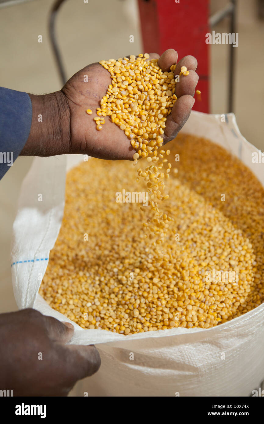 A worker bags dal at a commodities warehouse in Dodoma, Tanzania, East Africa. - Stock Image