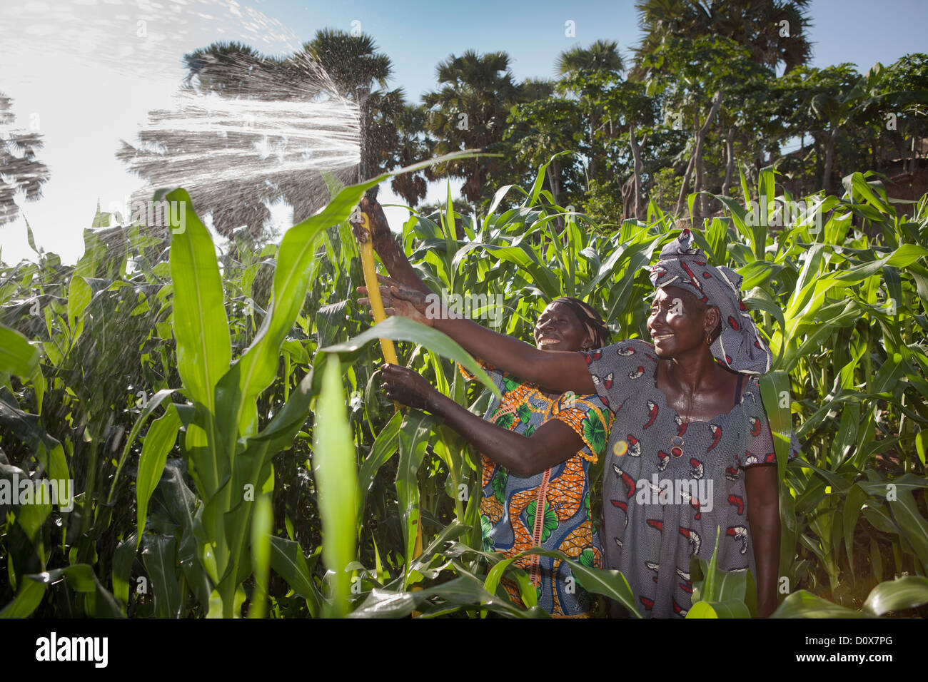 Women water their garden with the help of treadle pump irrigation system in Doba, Chad, Africa. - Stock Image