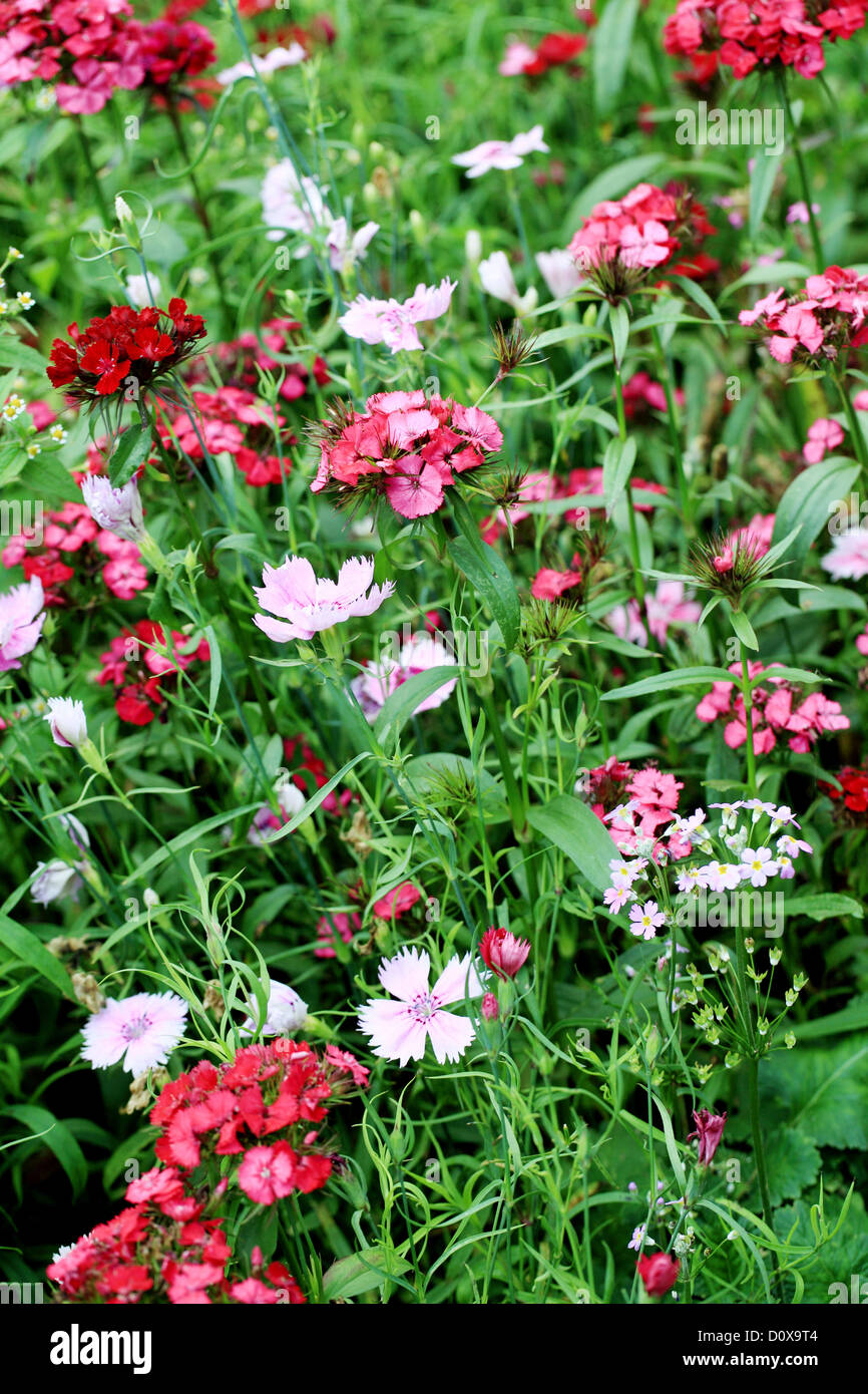 Pink flower garland buddhist temple stock photos pink flower beautiful flowers in a garden stock image mightylinksfo