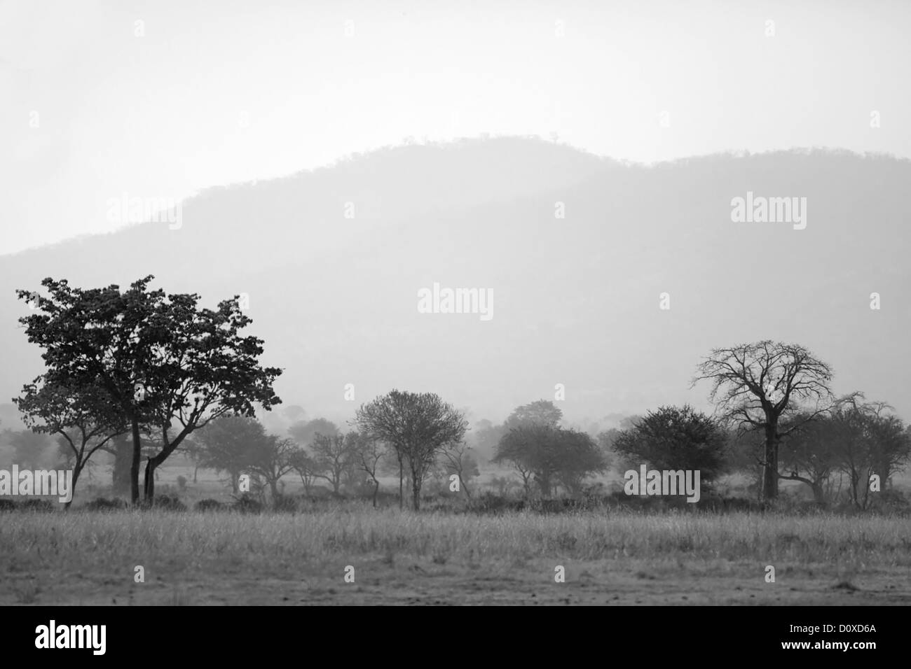 African Savannah - Stock Image