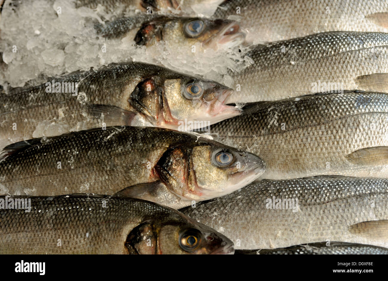 SEA BASS ON ICE ON DISPLAY IN A FISHMONGERS SHOP Stock Photo