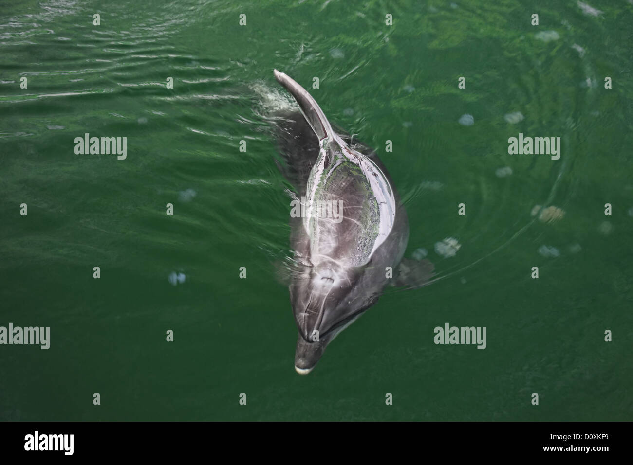 Dolphin and medusas - Stock Image