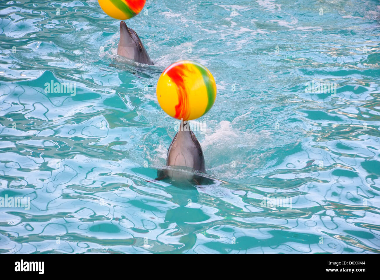 Dolphins with balls - Stock Image