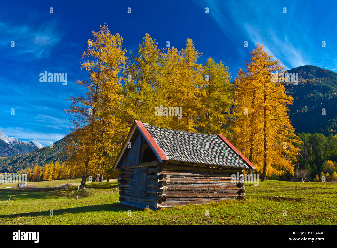 Austria, Europe, Gurgltal, Nassereith, Stadel, larches, meadow, Cirren, sky, blue, Yellow, wood, forest, nature, Stock Photo
