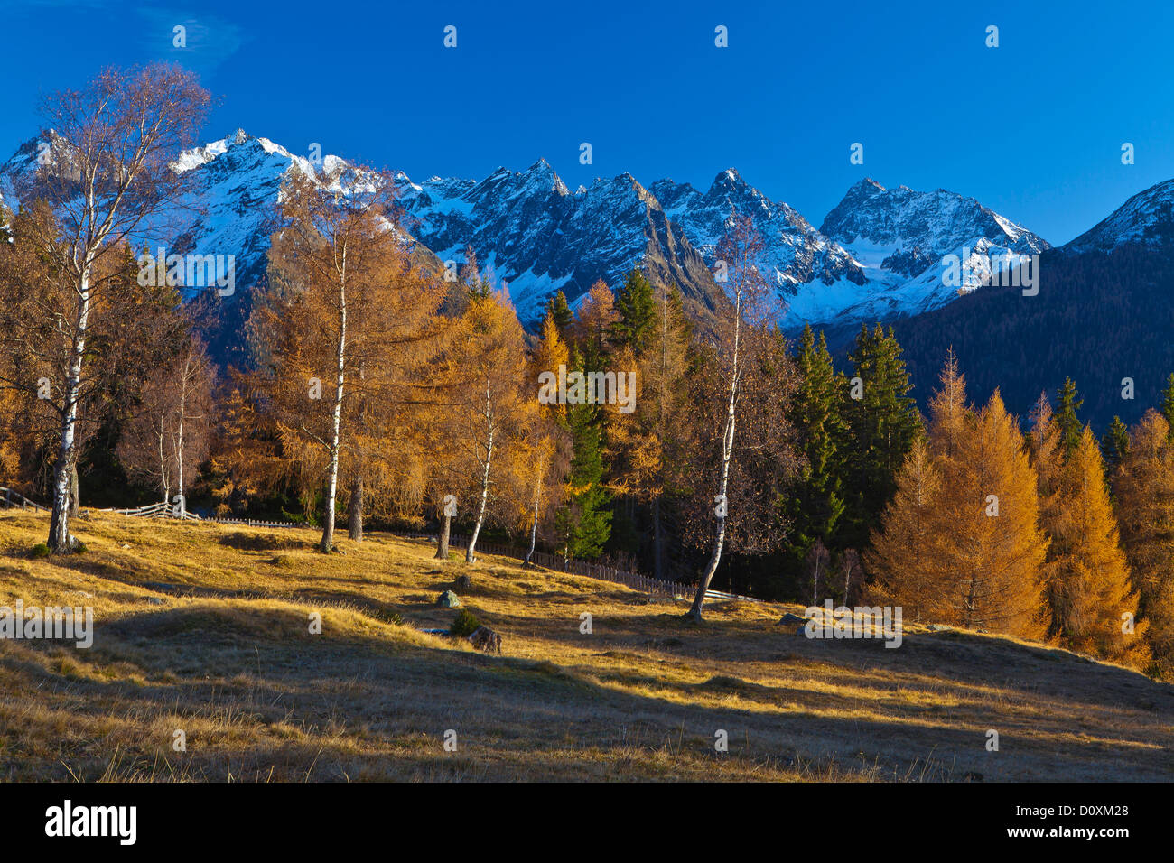 Austria, Europe, Tyrol, Tirol, Kaunertal, mountain Kauner, mountain pastures, birches, larches, mountains, snow, Stock Photo