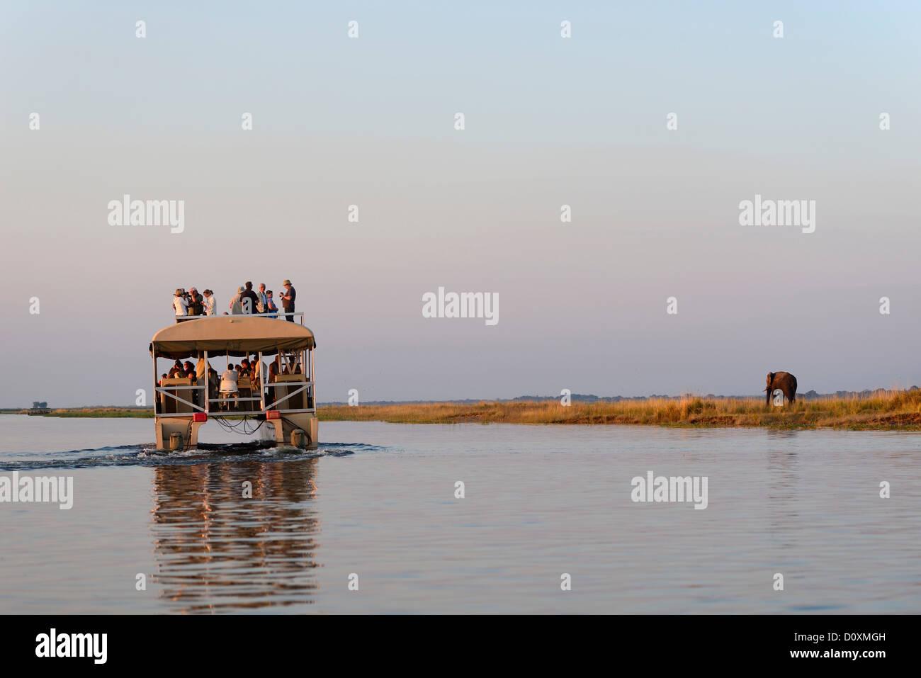 Africa, Botswana, Chobe, National Park, Hippo, Hippopotamus, animal, safari, water, river, horizontal, wildlife, Stock Photo