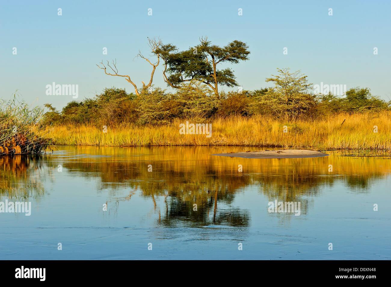 Africa, Bwa Bwata, National Park, Caprivi, Namibia, grasslands, horizontal, savannah, sunny, tree, water, watering - Stock Image