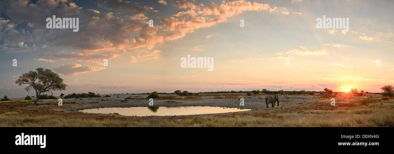 Africa, Etosha, National Park, Namibia, african, animal, colorful, drinking, dusk, elephant, animal, horizontal, - Stock Image