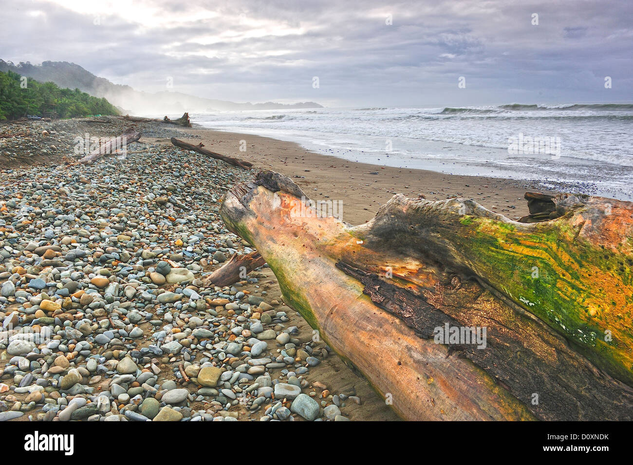 Central America, Costa Rica, pebble beach, pacific coast, rugged, surfing, driftwood - Stock Image