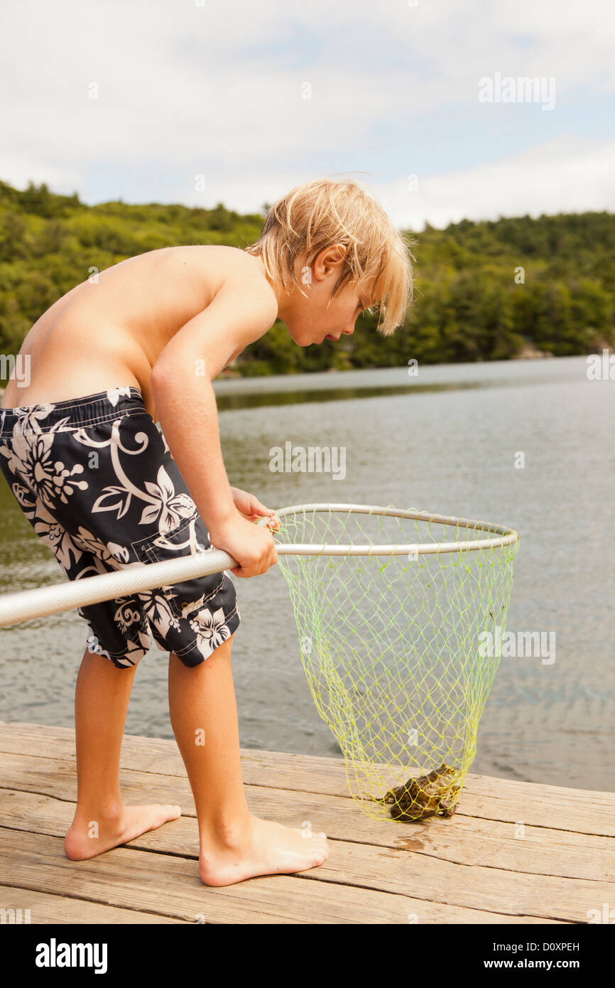 Boy looking at frog caught in net - Stock Image