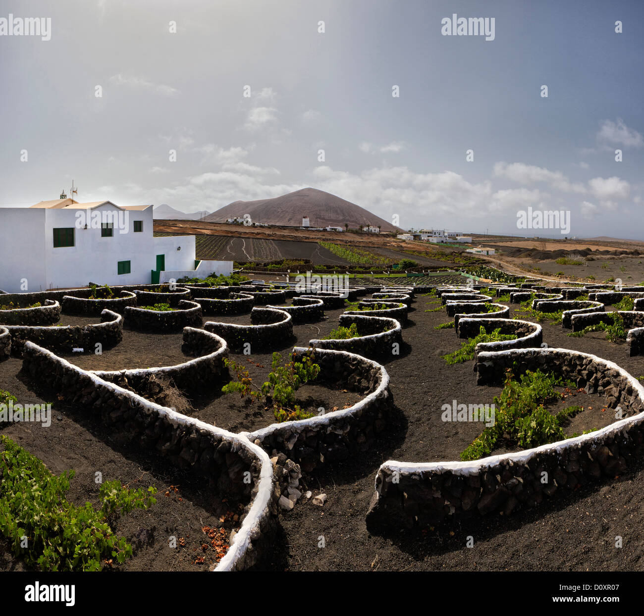 Spain, Lanzarote, Tiagua, Vineyard, bushes, lava pits, city, village, summer, mountains, hills, Canary Islands, - Stock Image