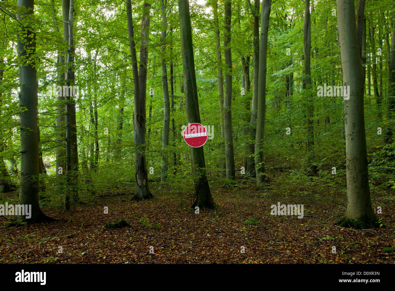 No Entry sign in a forest - Stock Image
