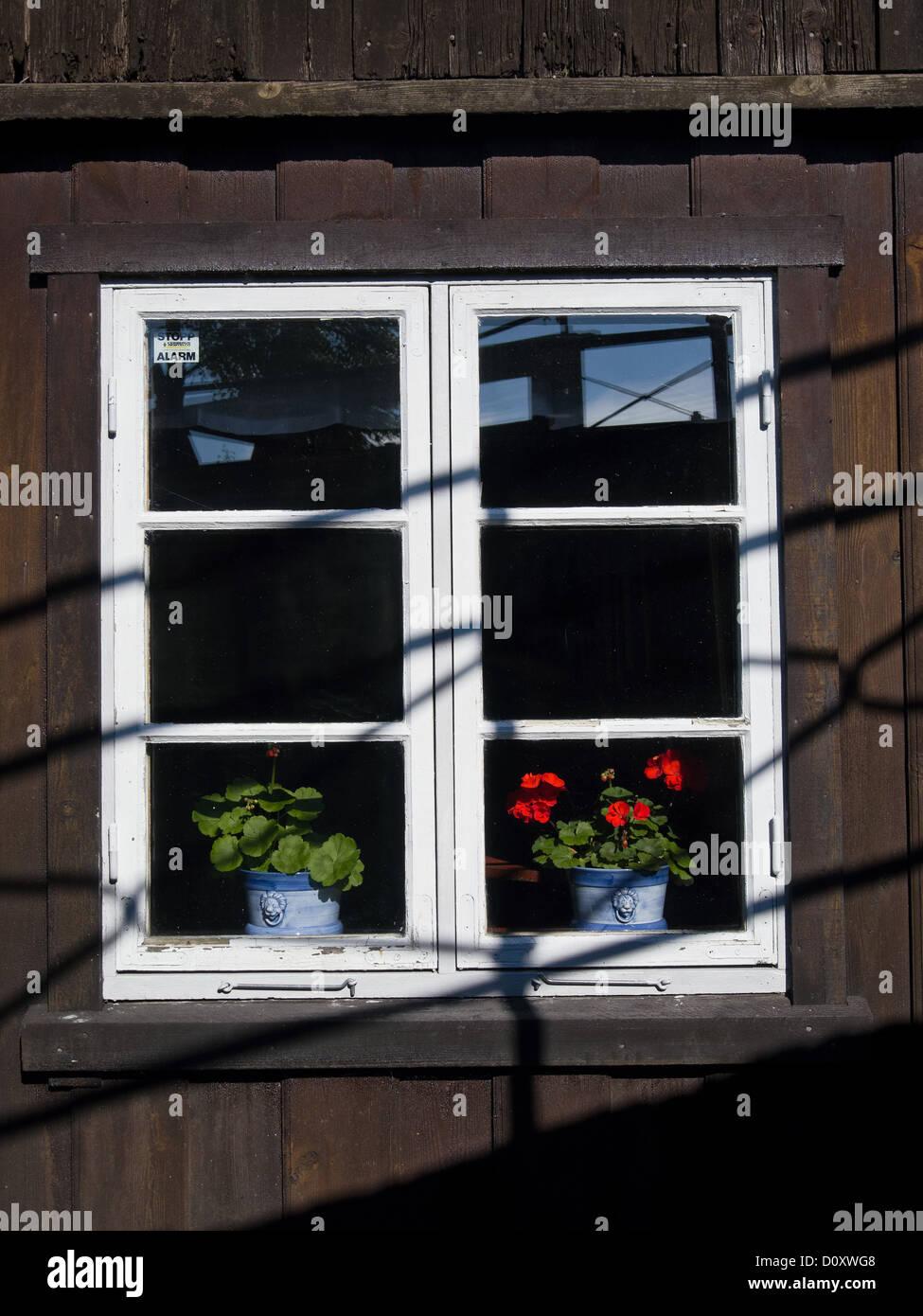 Blue colors work, Buskerud, window, windowsill, geraniums, timber house, Norge, Norway, Scandinavia - Stock Image