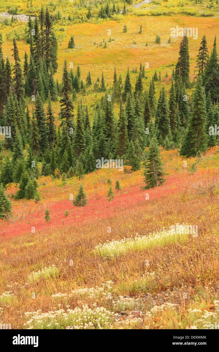 Fall colors in alpine tundra, Mount Rainier National Park, Washington, USA - Stock Image