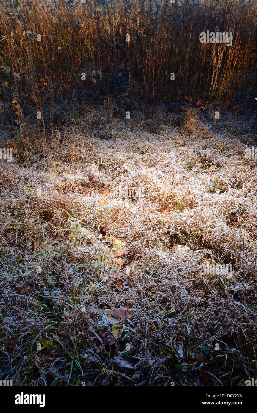 Frost On Grass & Weeds - Stock Image