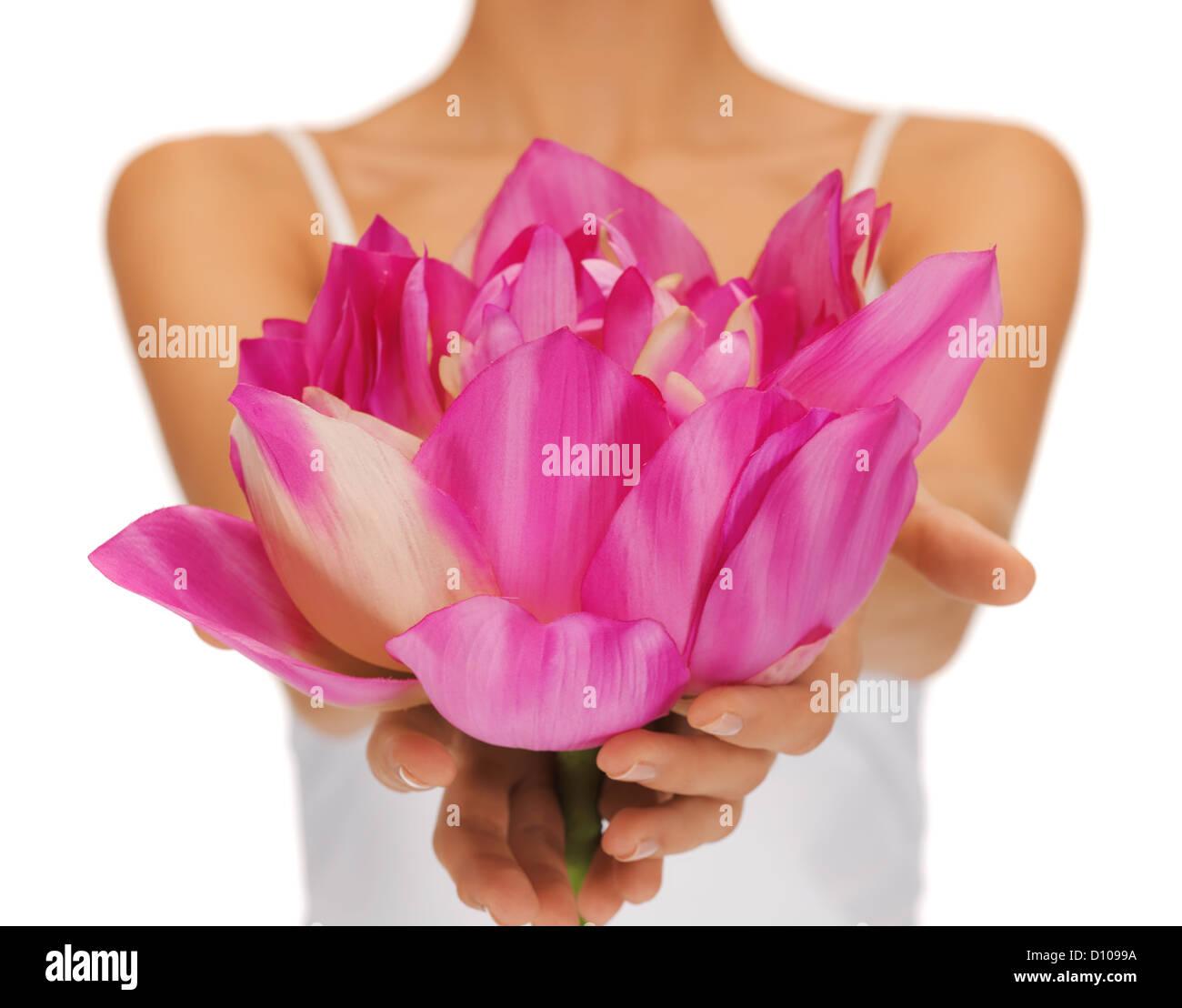 Hands holding lotus flower stock photos hands holding lotus flower woman hands holding lotus flower stock image mightylinksfo