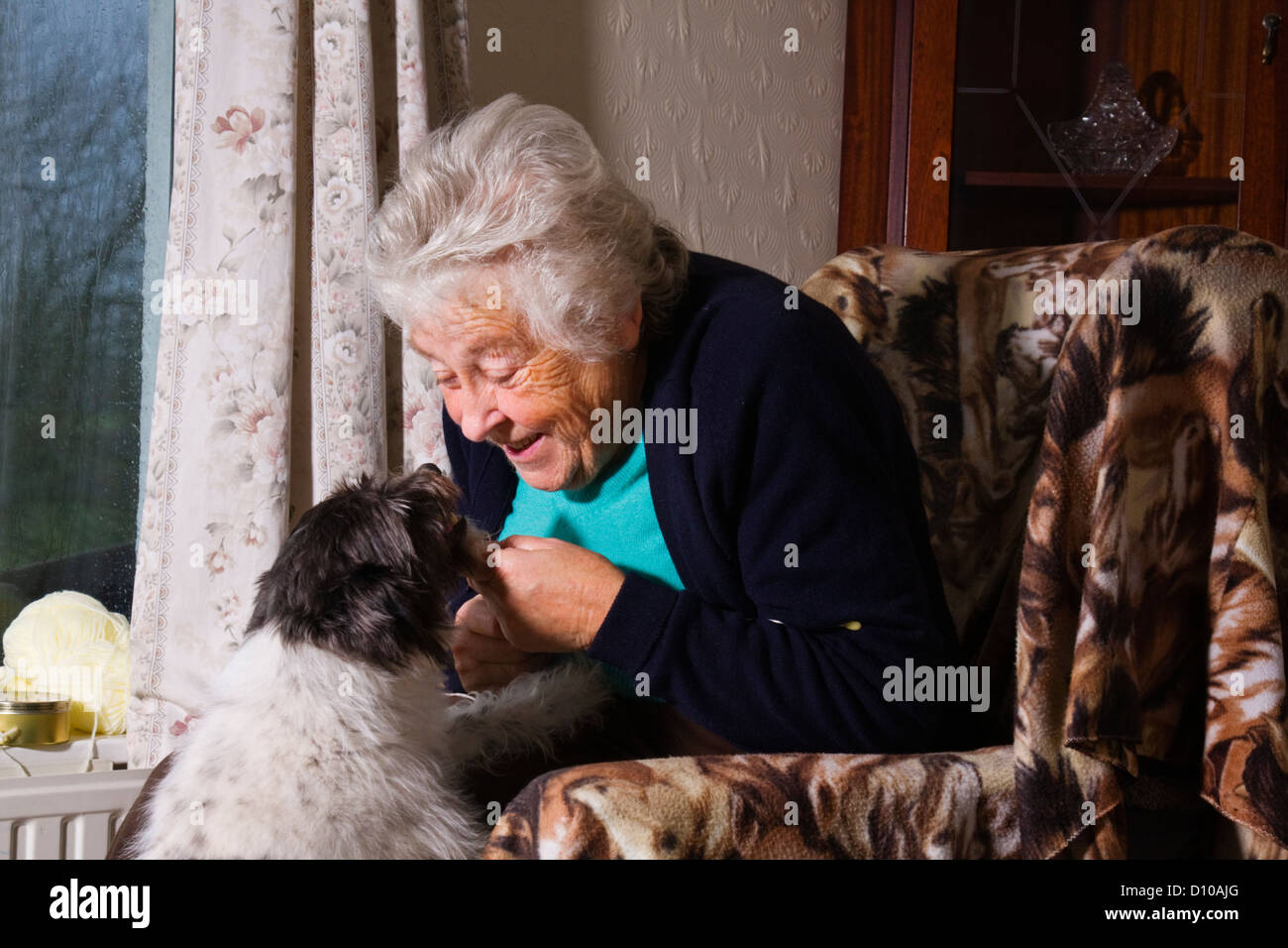 Interaction between old lady and her pet, Devon UK - Stock Image