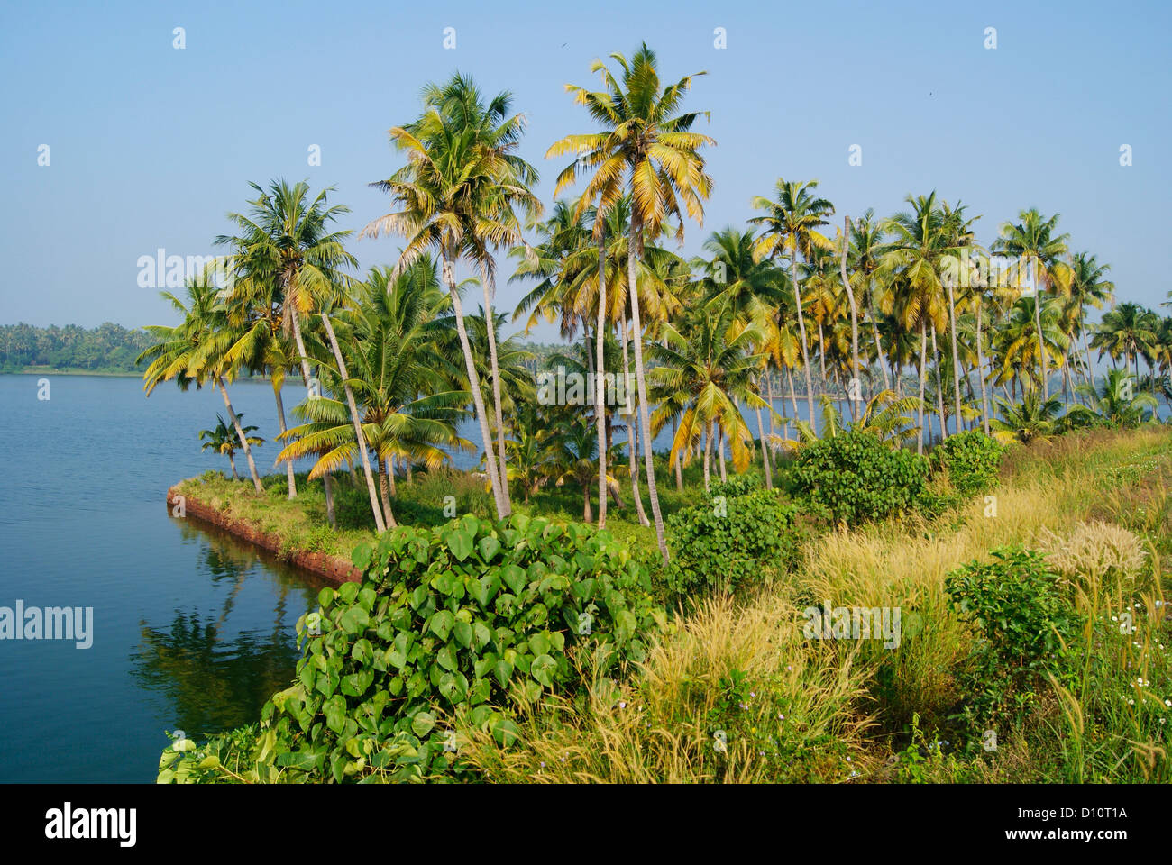 Kerala Backwaters and serene India Landscape Scenery view of coconut Tree Palms - Stock Image