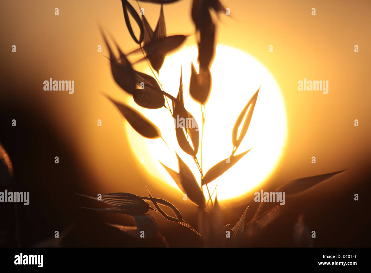 Illuminated grasses near the village of Villars in the provence - Stock Image