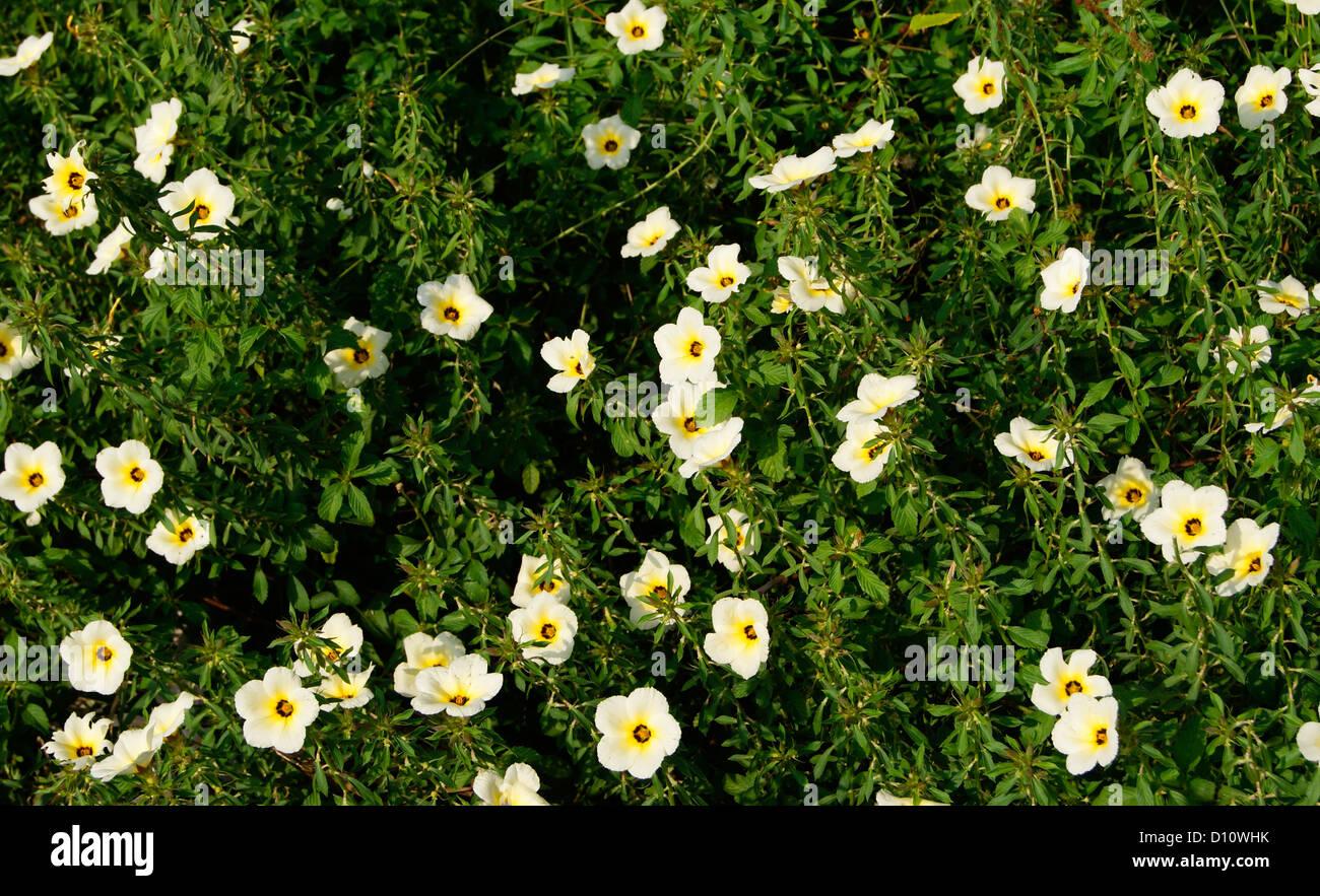 India wild white flowers stock photos india wild white flowers lot of white flowers stock image mightylinksfo