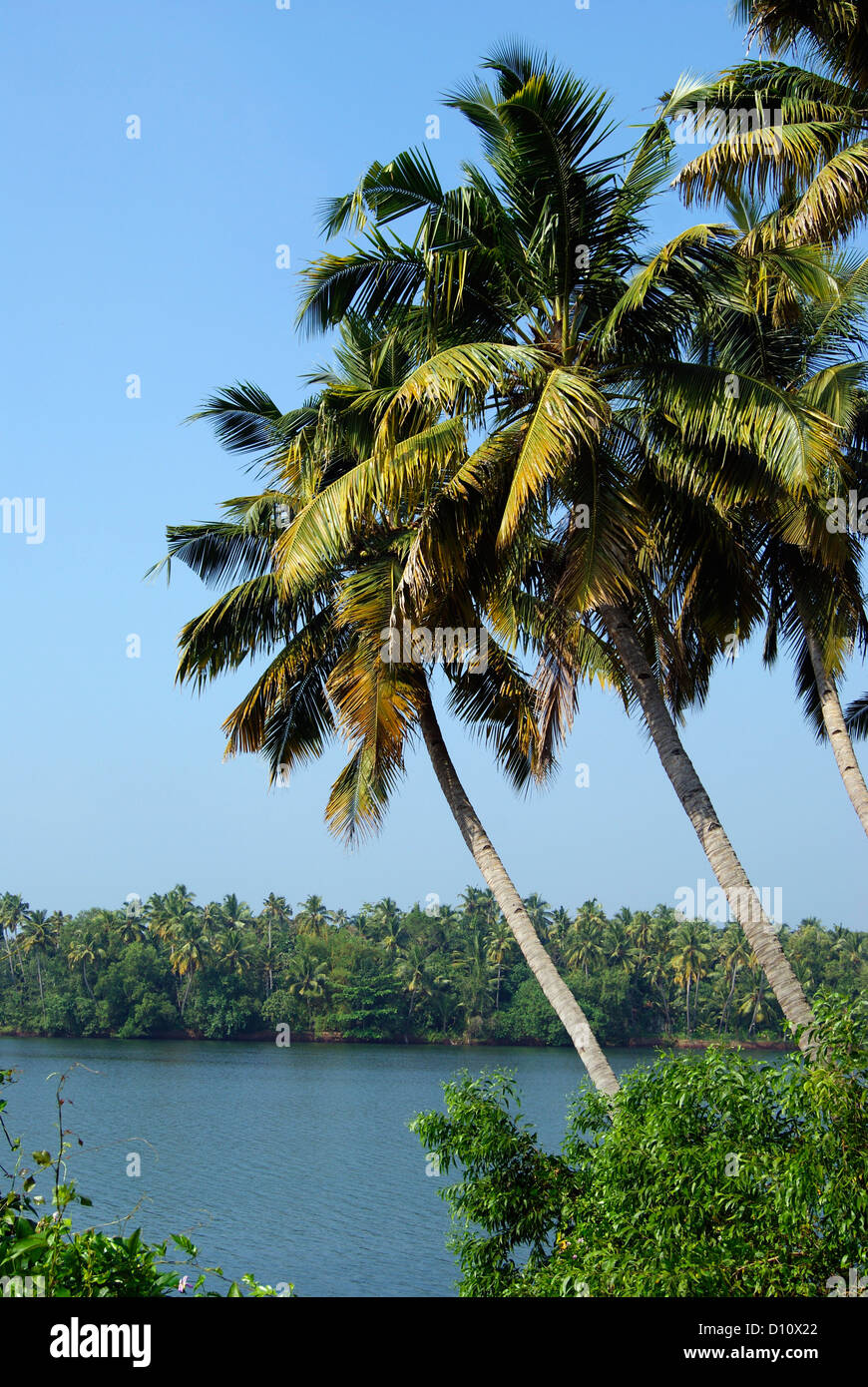 Coconut Palm trees Landscape and Kerala Backwaters scenery in South India - Stock Image
