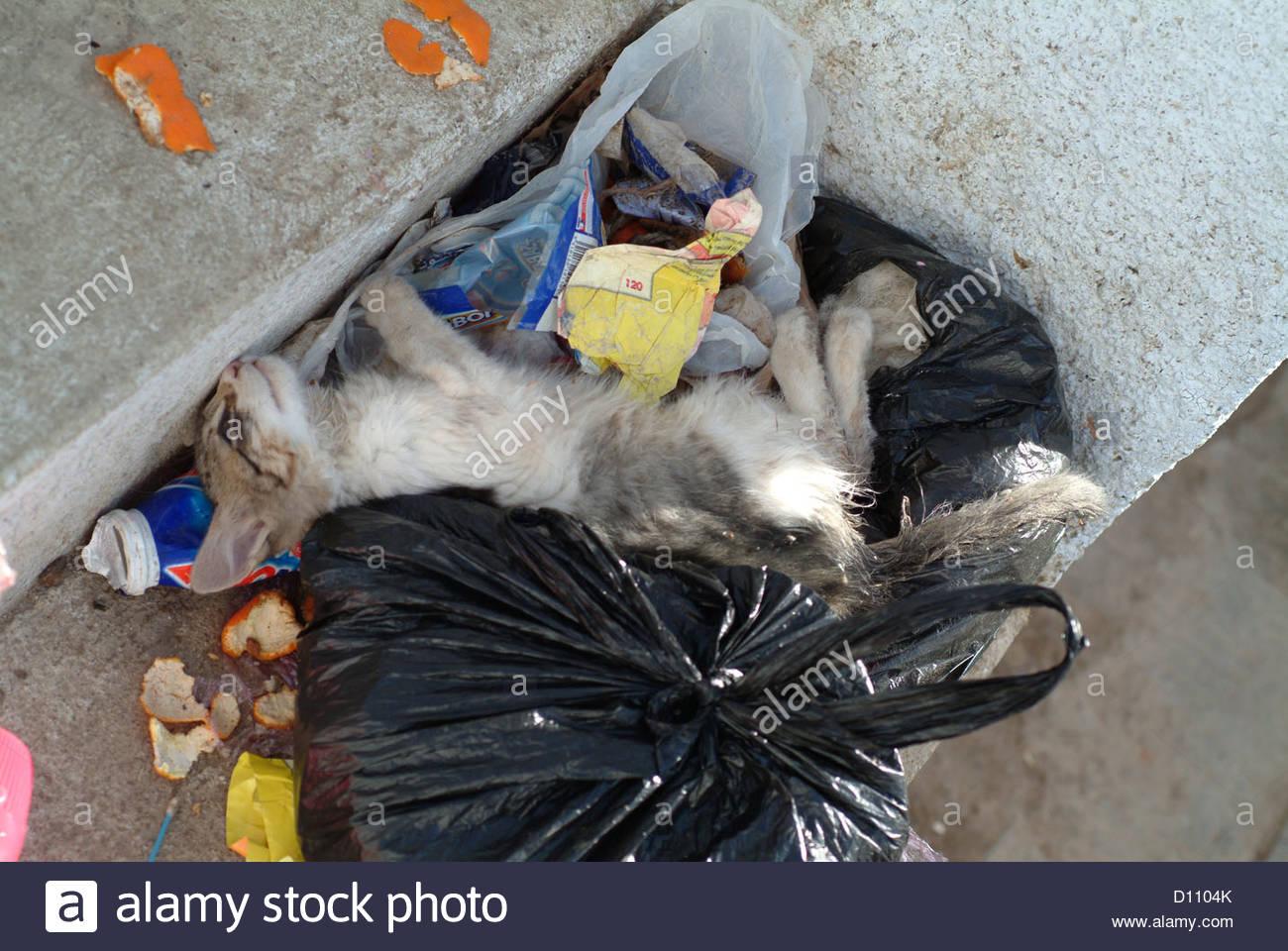 death pet pets animal animals mistreatment mistre - Stock Image