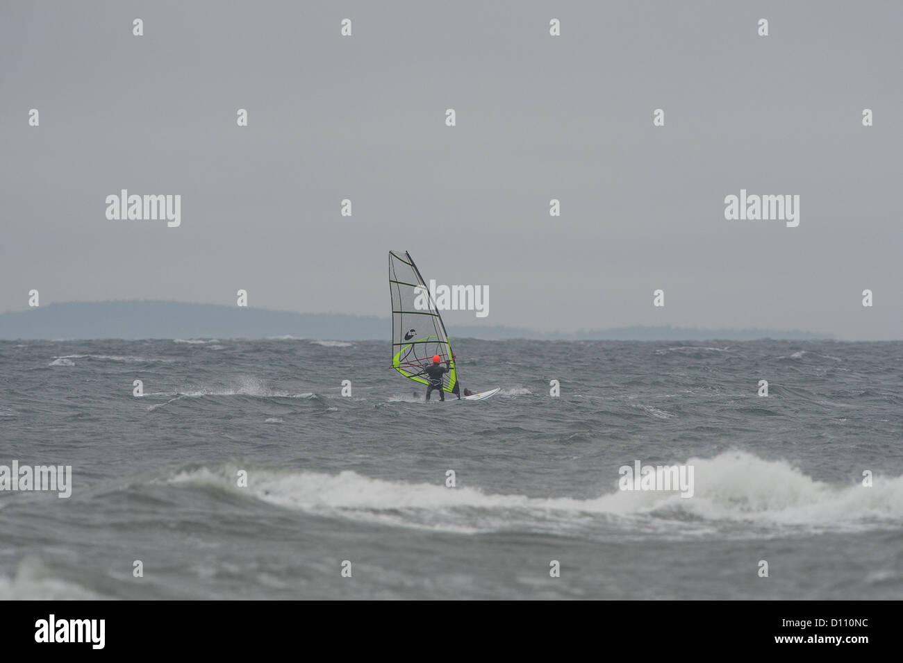 A lone windsurfer has a close encounter with a Stellar Sea Lion. - Stock Image
