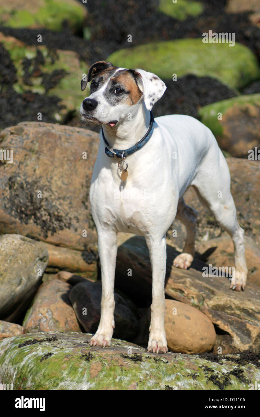 Cute dog stood on rocks with collar and name tag. - Stock Image