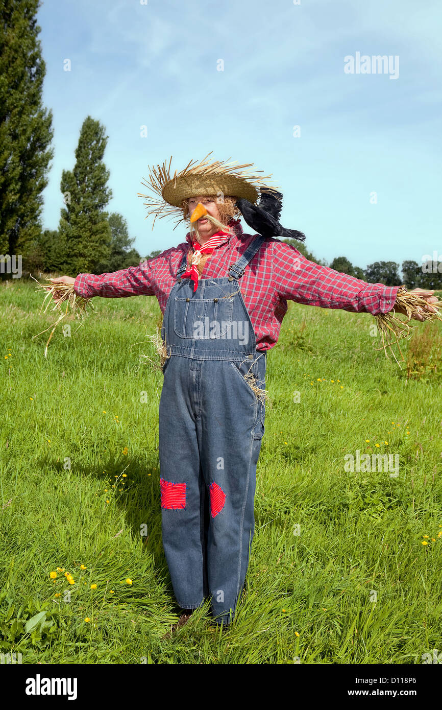 Farmer acting as a living scarecrow with a black crow on his ...