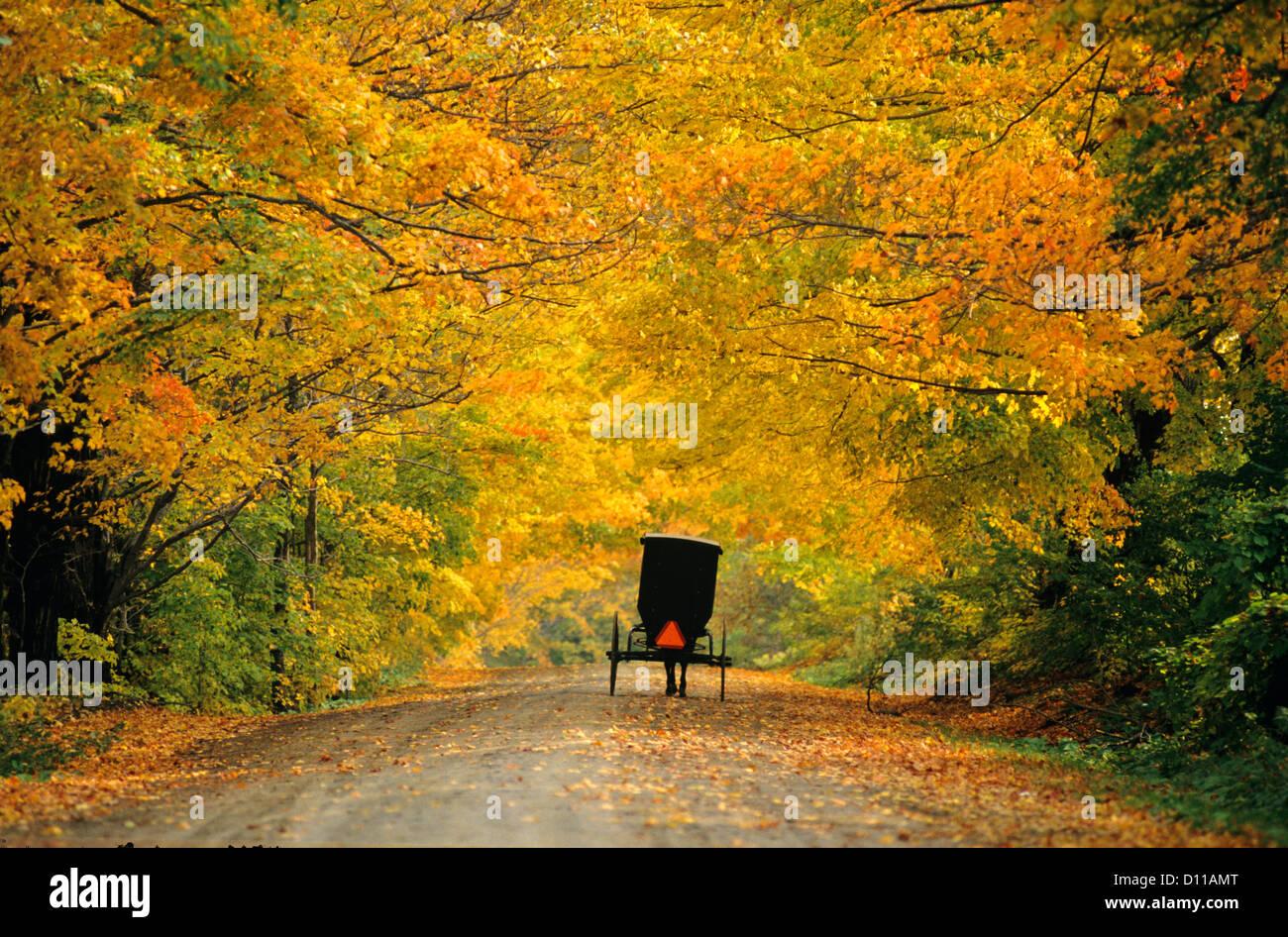 ⭐️ Cảnh Đẹp Mùa Xuân Trên Thế Giới ⭐️ 1990s-western-new-york-conewango-valley-amish-buggy-on-autumn-road-D11AMT