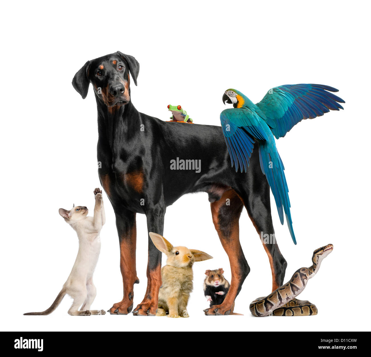 Group of pets and wild animals against white background - Stock Image