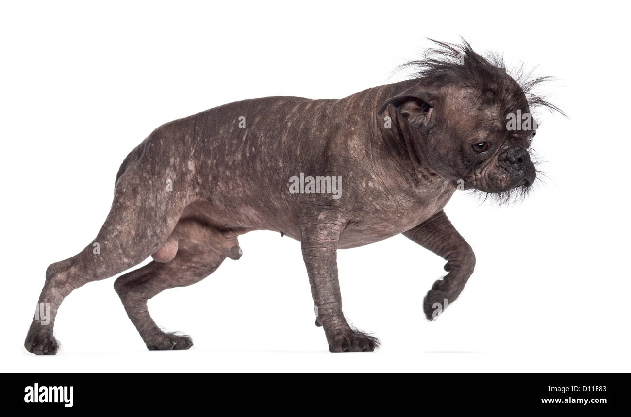 Hyena Breed With Dog