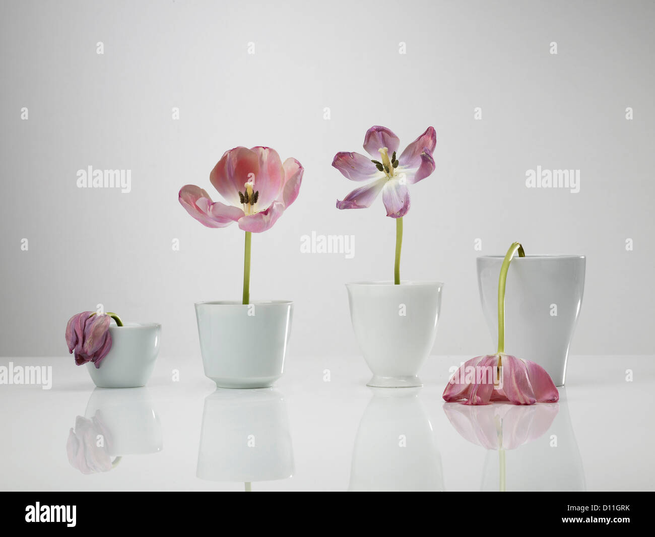 image of vase gerber photo free spring vases stock royalty in flowers