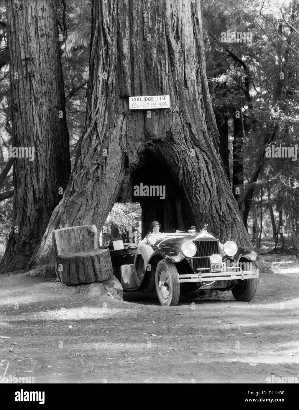 1930s WOMAN DRIVING CONVERTIBLE CAR THROUGH OPENING IN GIANT SEQUOIA TREE TRUNK COOLIDGE TREE MENDOCINO CALIFORNIA - Stock Image