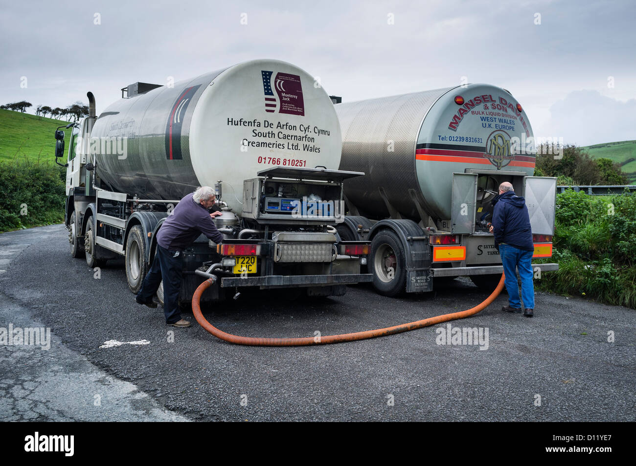 Two bulk tanker drivers transfering milk from one lorry to another before delivering it to a cheese processing factory, - Stock Image