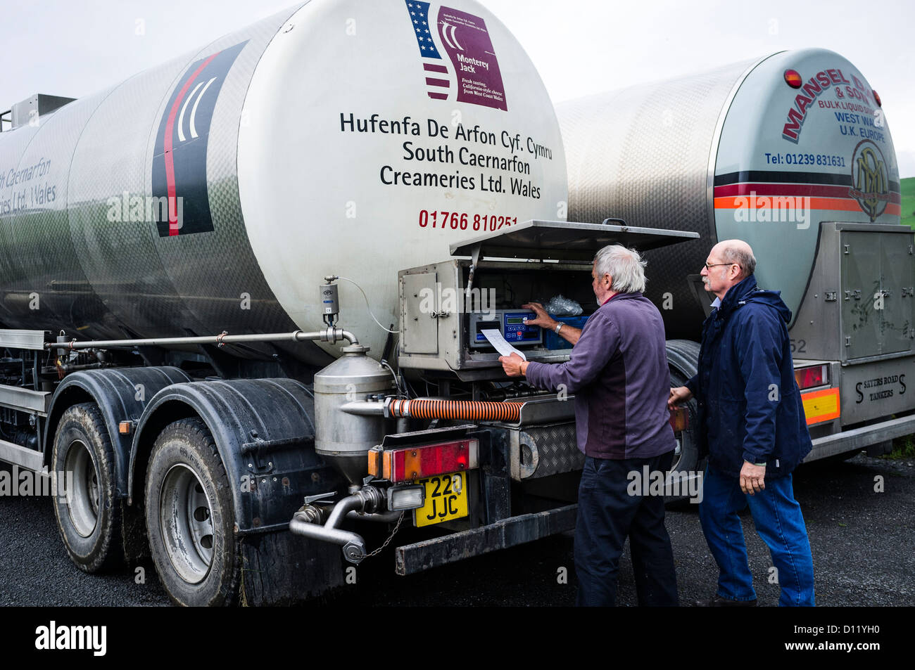 Two bulk tanker drivers transferring milk from one lorry to another before delivering it to a cheese processing - Stock Image