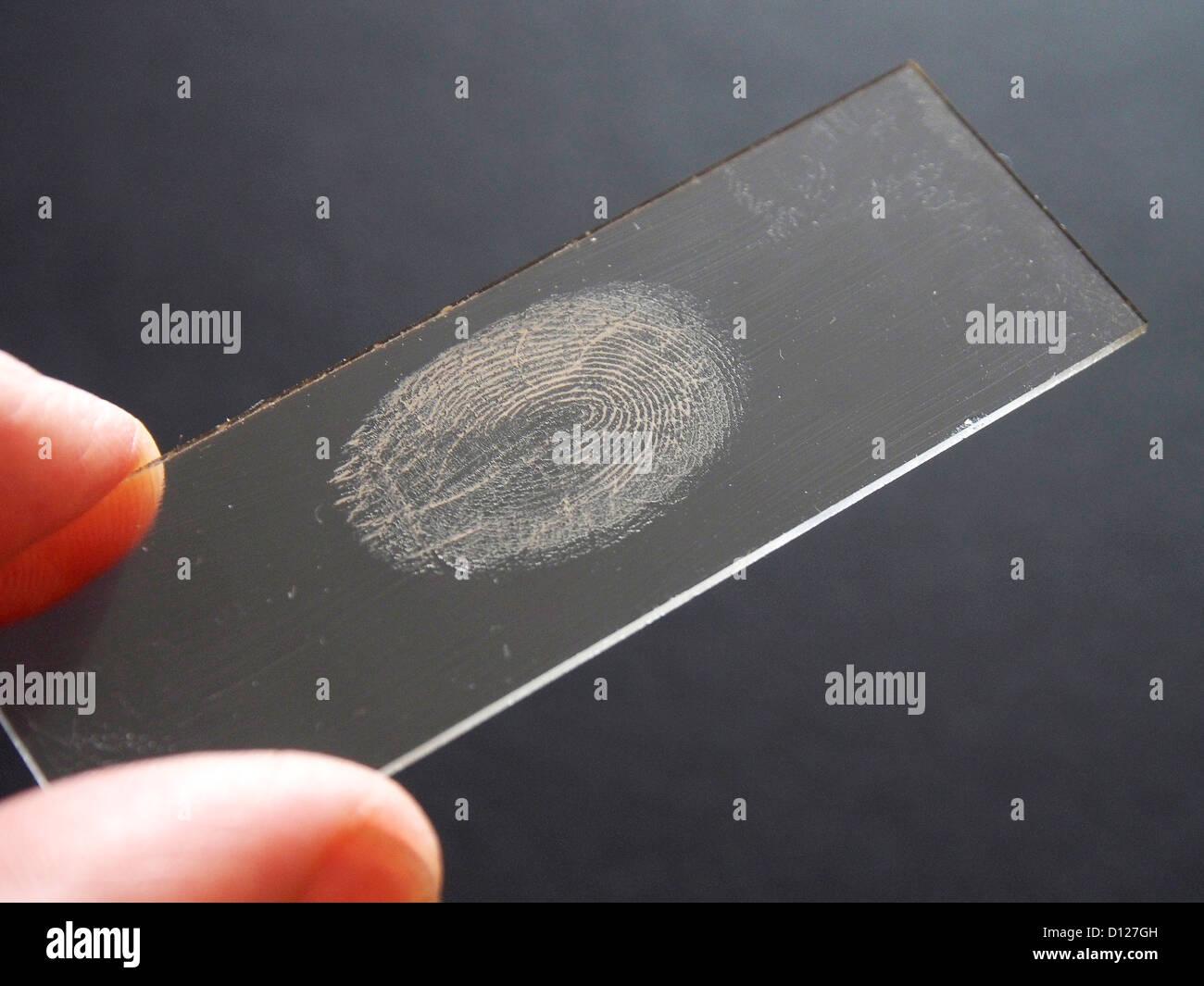 A fingerprint on a glass microscope slide. - Stock Image