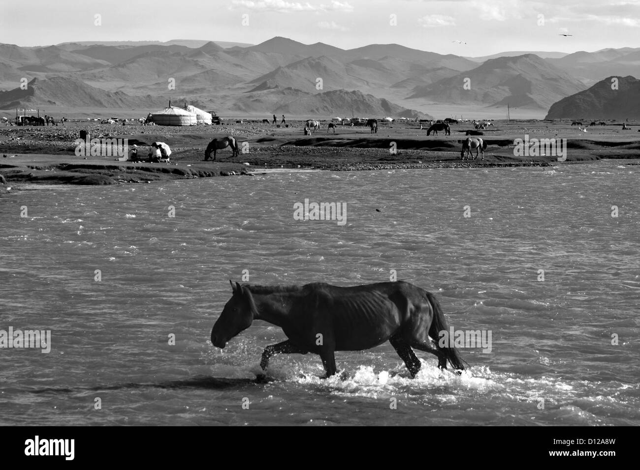 Horses on the outskirts of Khovd - Stock Image