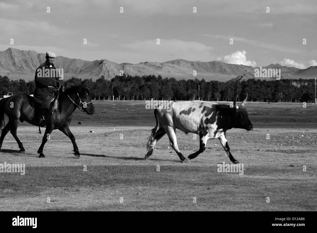 Herder outside Khovd, W. Mongolia - Stock Image