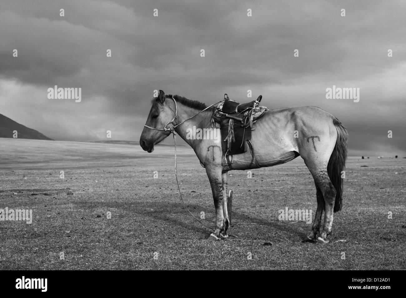 Nomad's horse in Tsambagarav Uul National Park - Stock Image