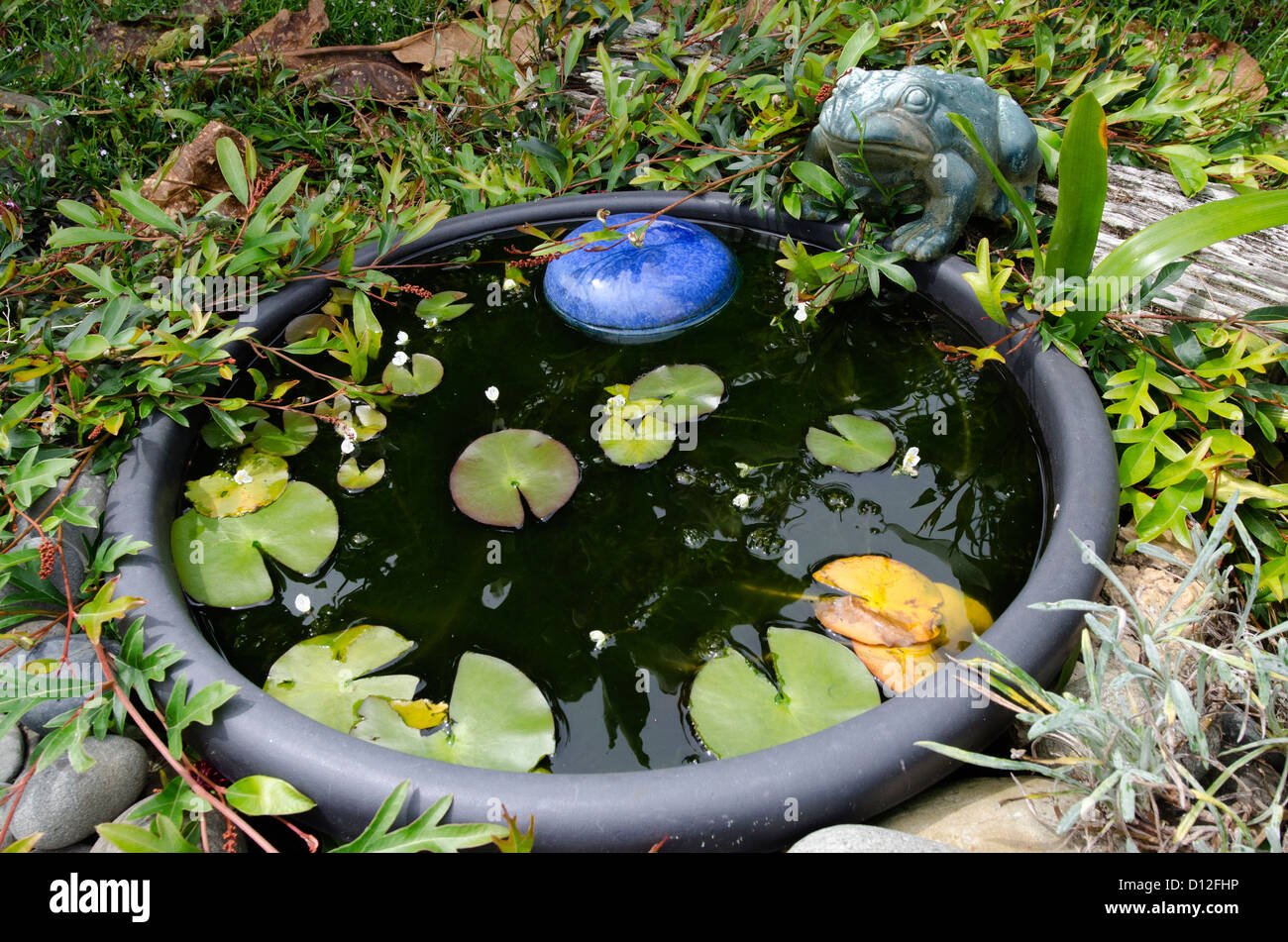 Alamy & A frog statue decor and a water pond in the garden Stock Photo ...