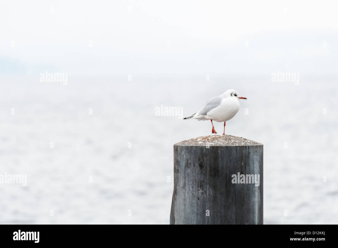 Seagull standing on a pole. - Stock Image