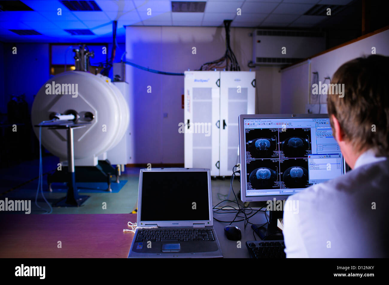 Scientist or technician assesses the computer image on screen monitor from a small bore Magnetic Resonance Imaging - Stock Image