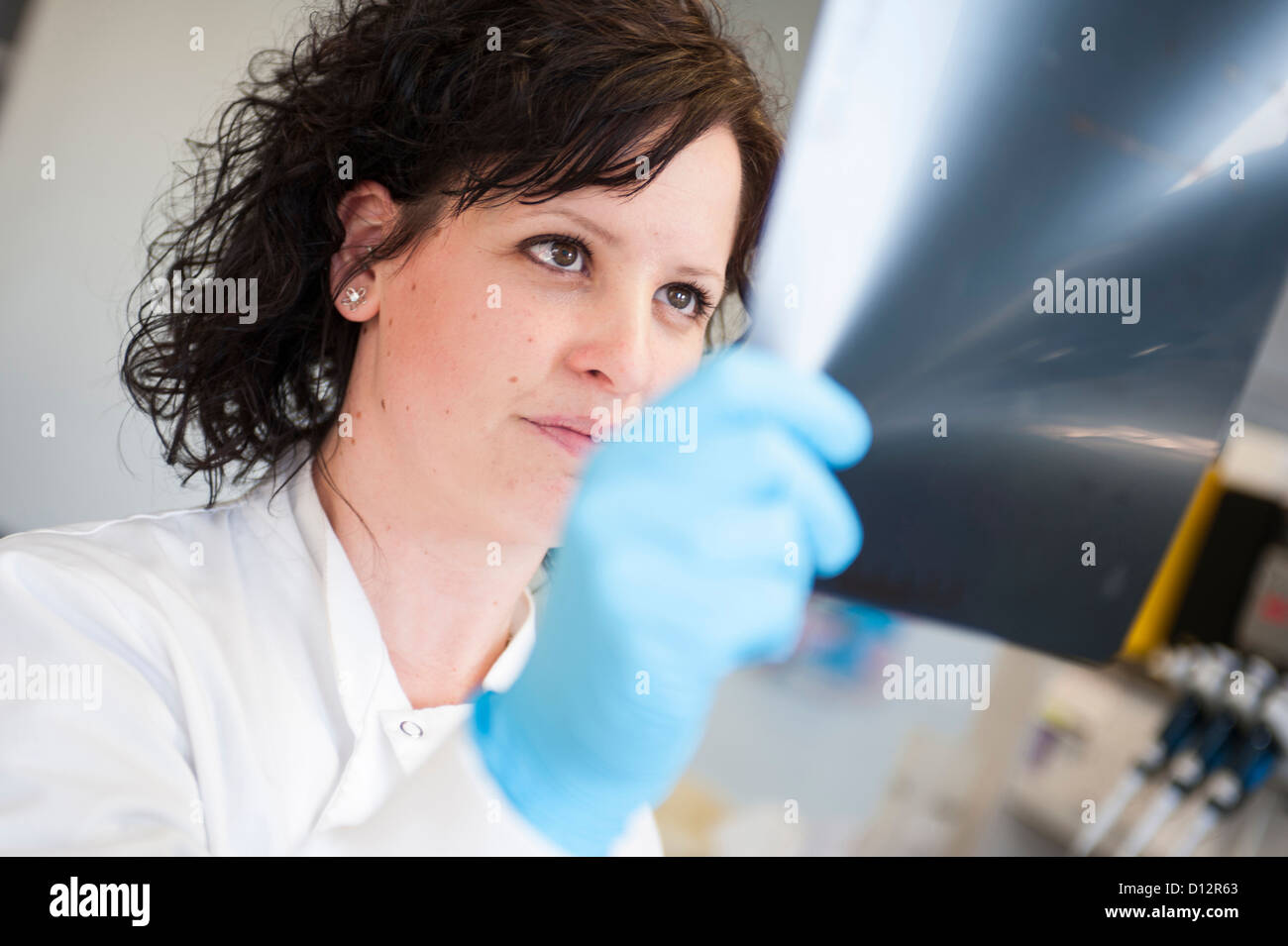 Female scientist holds a DNA autoradiogram for examination in science lab - Stock Image
