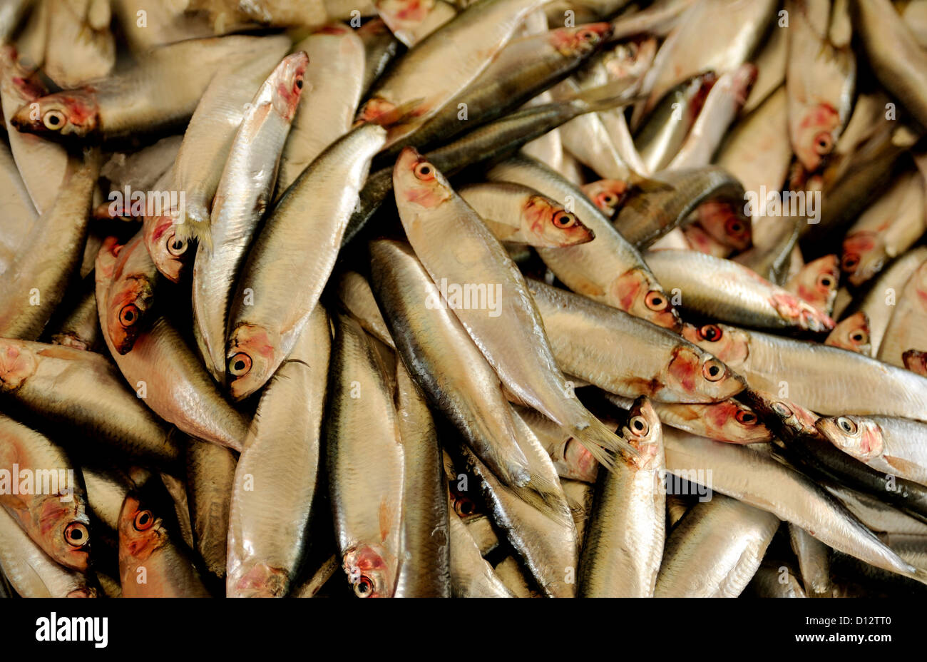 SPRATS - Stock Image