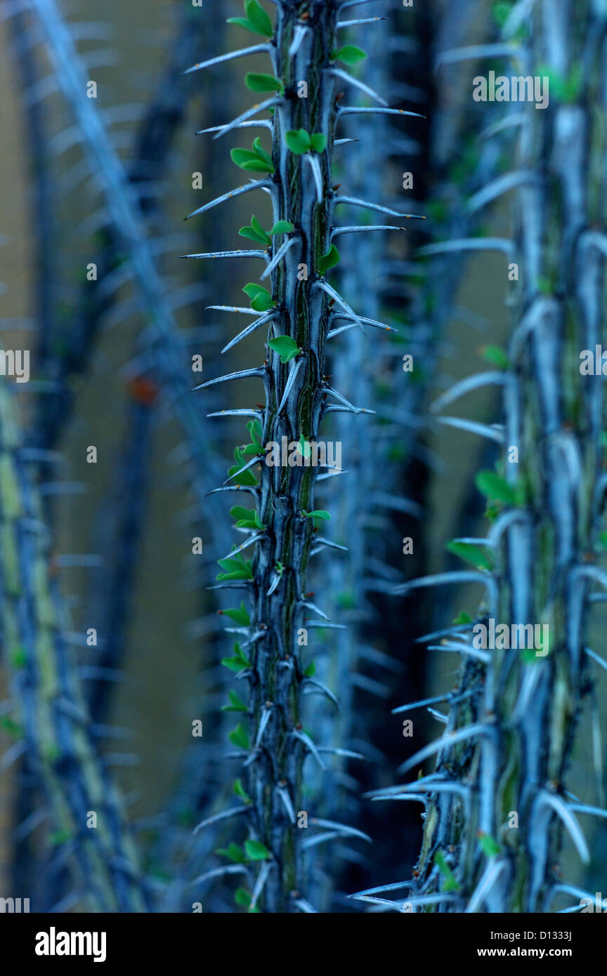 Detail of spiked cactus - Stock Image