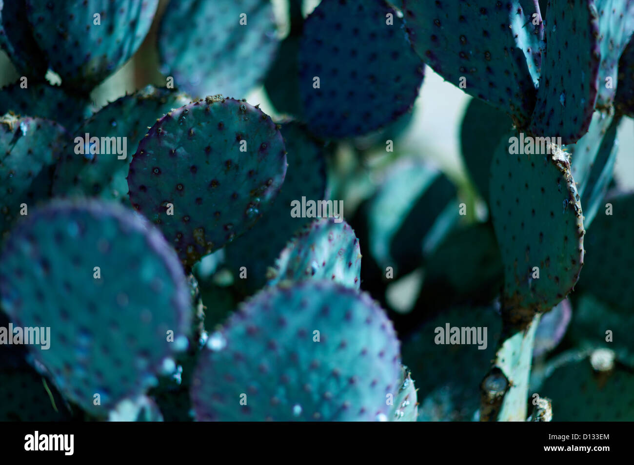 Close-up of spiked cactus - Stock Image